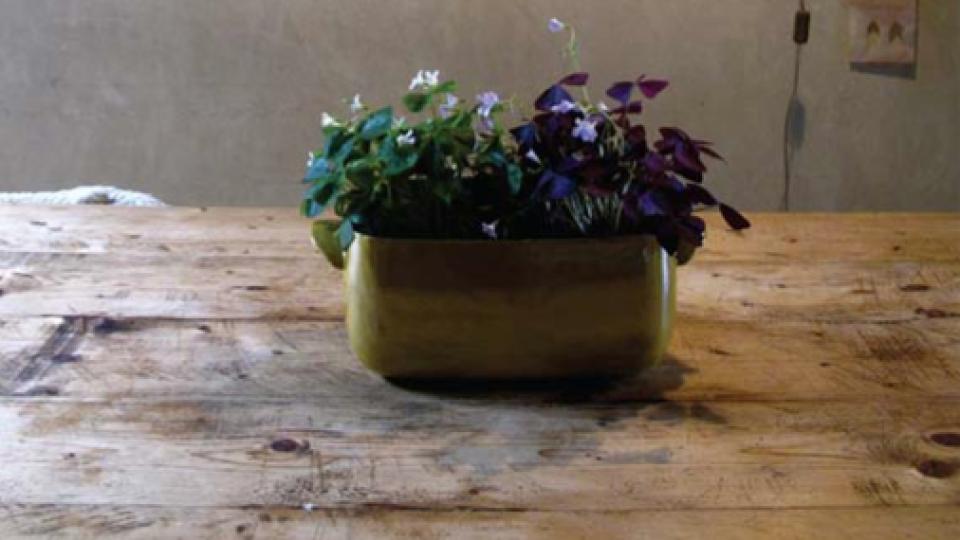 #4 Snors adventskalender: Ik en mijn plant